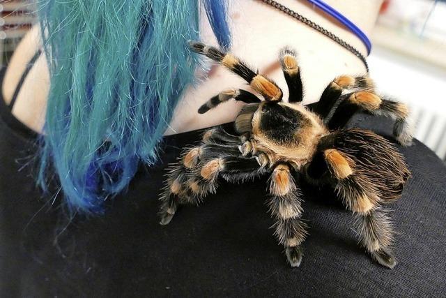 Warum die Vörstetter Feuerwehr mit Vogelspinnen und Riesenschlangen geübt hat
