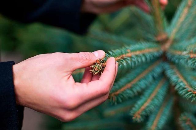 Zwei Schwarzwälder Bauern bieten glyphosatfreie Christbäume an