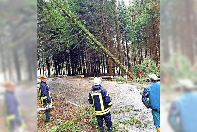 Steinens arg zerrupfter Wald