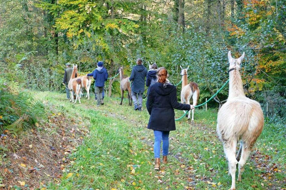 Spaziergang durch das Bohrertal  | Foto: Nikola Vogt