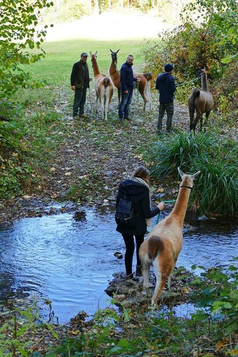 Auf dem Spaziergang gilt es auch, eine Wasserstelle zu durchqueren  | Foto: Nikola Vogt