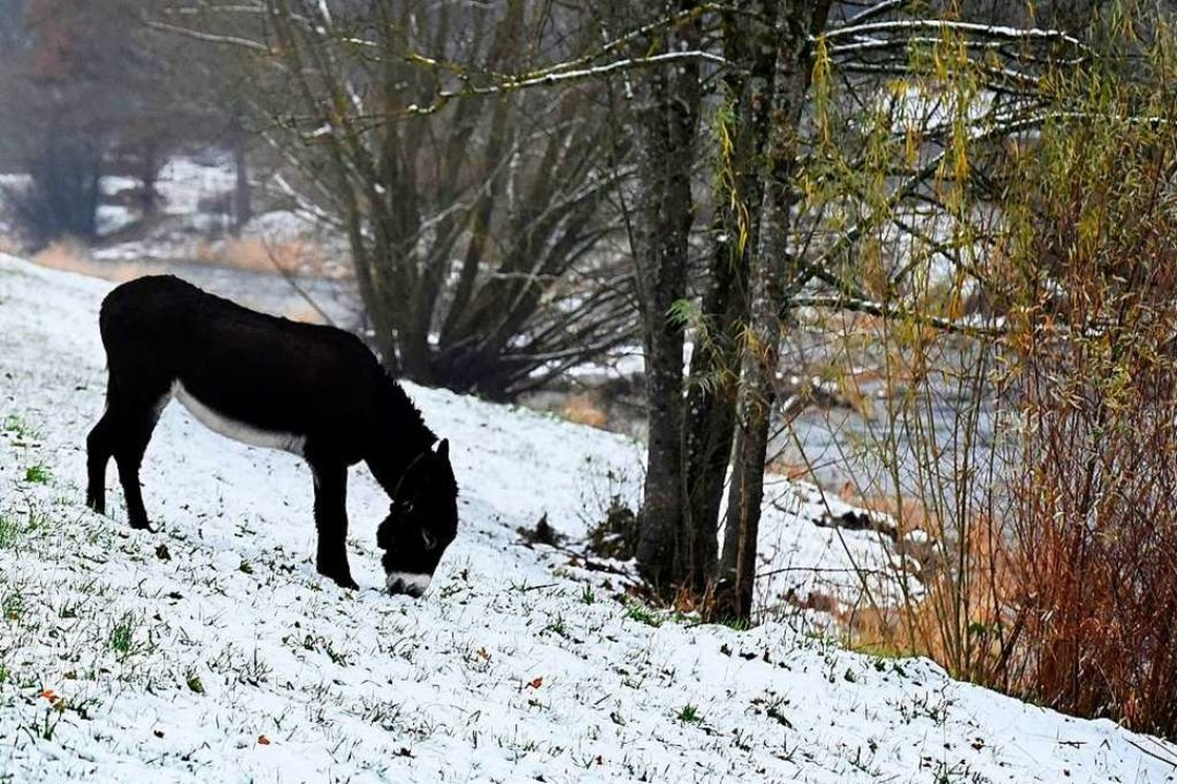 Eselwanderung: Warten auf das Christkind in der Natur    Foto: Thomas kunz