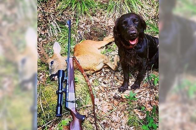 Zwölf Stück Rehwild und ein Fuchs auf der Strecke