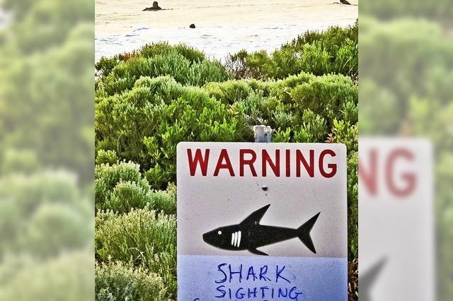 Der Mensch ist eine Gefahr für den Hai