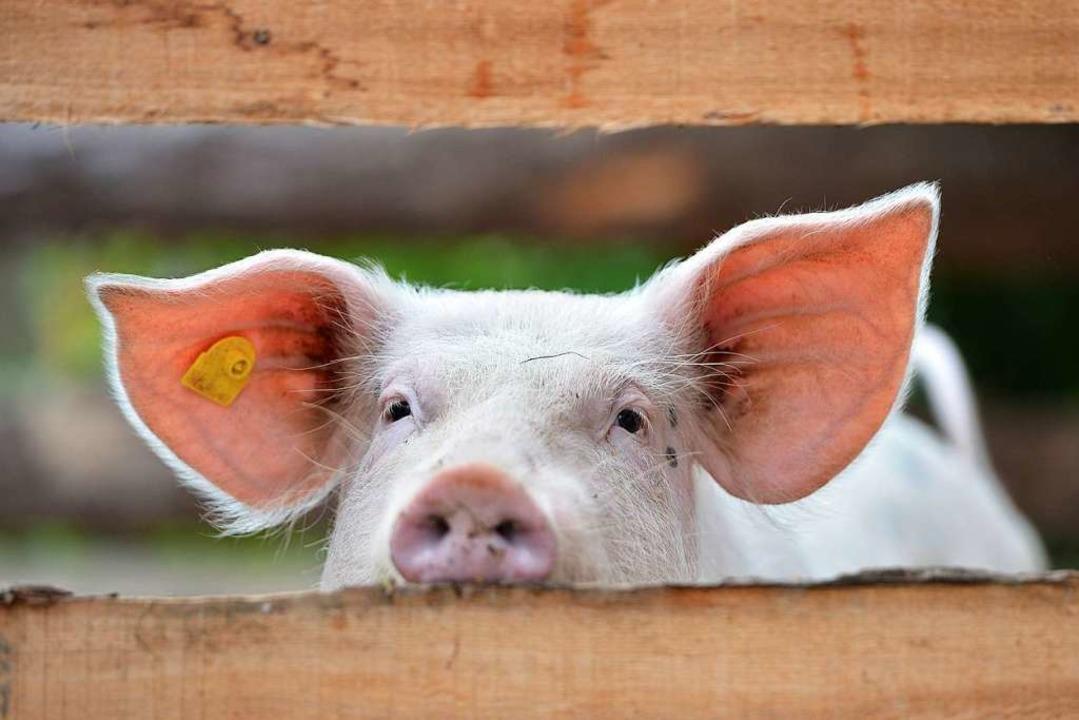 Kräuter sollen die Tiere robuster machen. (Symbolbild)  | Foto: Lilifox /adobe.com