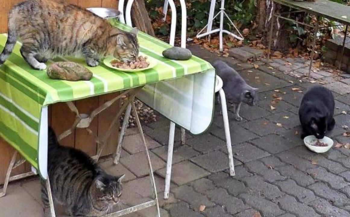 Fütterungszeit bei den Katzen von Renate Benz     Foto: Presse-AG