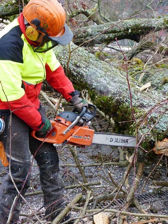 Ein gefährliches Geschäft ist die Arbe...arbeiter unter einem Baum eingeklemmt.    Foto: Sattelberger