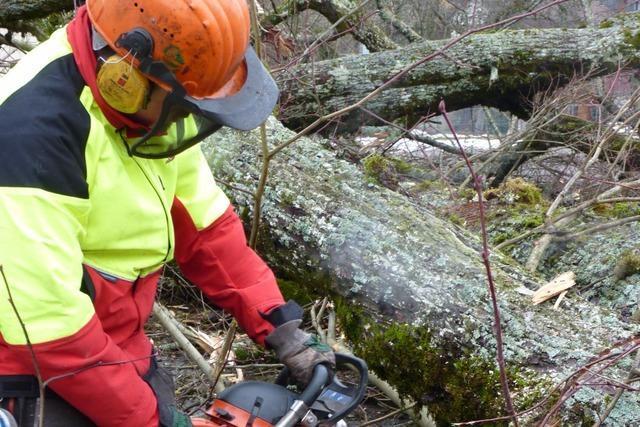 Waldarbeiter in Steinen unter Baum eingeklemmt