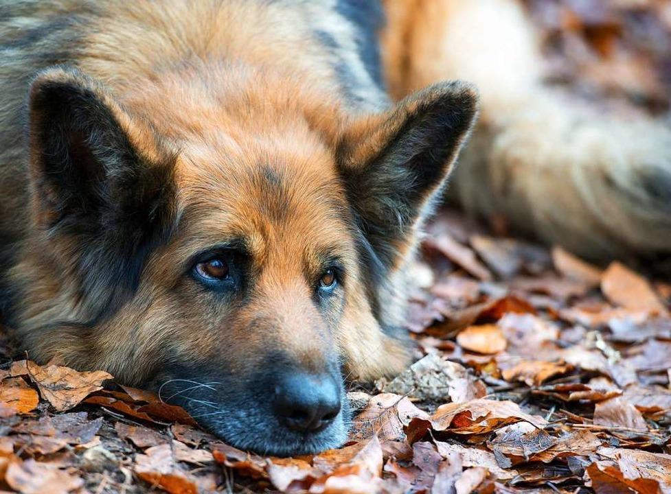 200 Euro beträgt künftig die Hundesteu...ehalter wollen dies nicht akzeptieren.    Foto: Patrick Pleul (dpa)