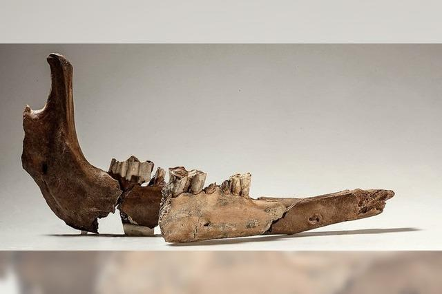 Rare Fundstücke aus den Tagen des antiken Roms