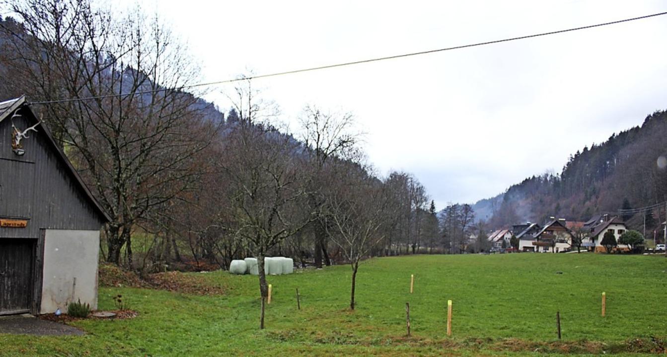 Auf der  Kasperhofmatte soll gebaut werden.     Foto: Karin Heiss