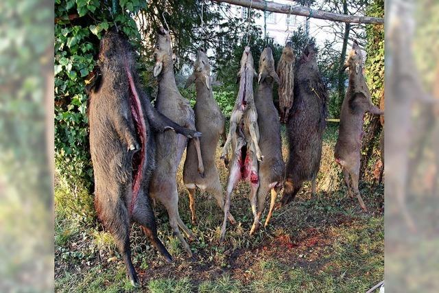 Auf der Jagd mit Gewehr und Stoßstange