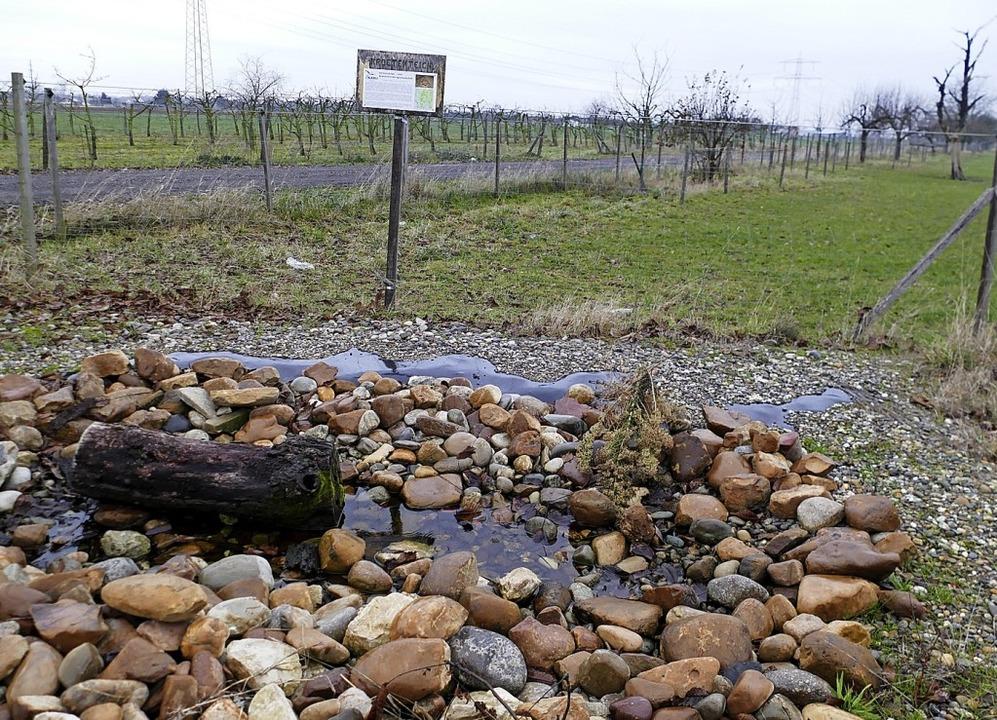 Das ist eines der kleinen Biotope bei ... für  die Kreuzkröte herrichten will.     Foto: Langelott