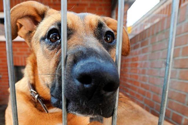 Viele Tierheime vermitteln bis Neujahr keine Tiere mehr