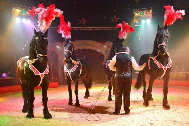 Verletztes Zirkuspferd wird in Lörrach von der Polizei erschossen