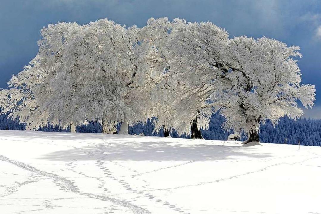 Die Prognose für diesen Winter: Es wird überaus mild.    Foto: Ingo Schneider