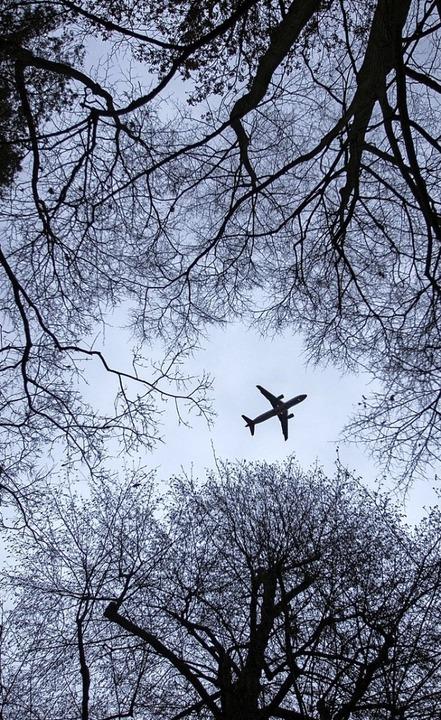 Wenn keine Blätter mehr an den Bäumen ...O<BZ-Texttief>2</BZ-Texttief>-Ausstoß.  | Foto: dpa