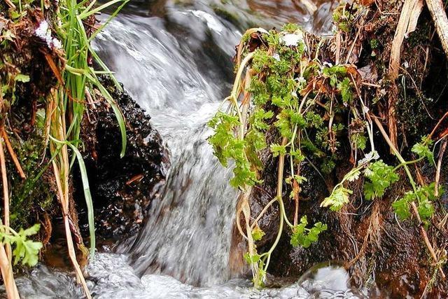 Die Quellen im Hotzenwald füllen sich wieder mit Wasser