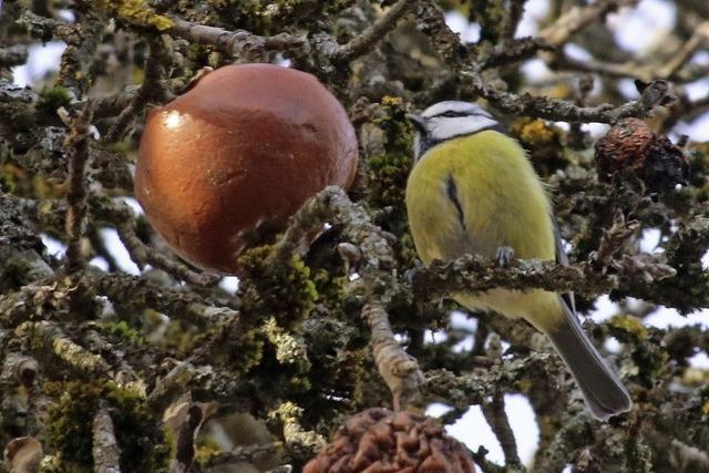 Nabu lädt zur Zählung der Wintervögel ein