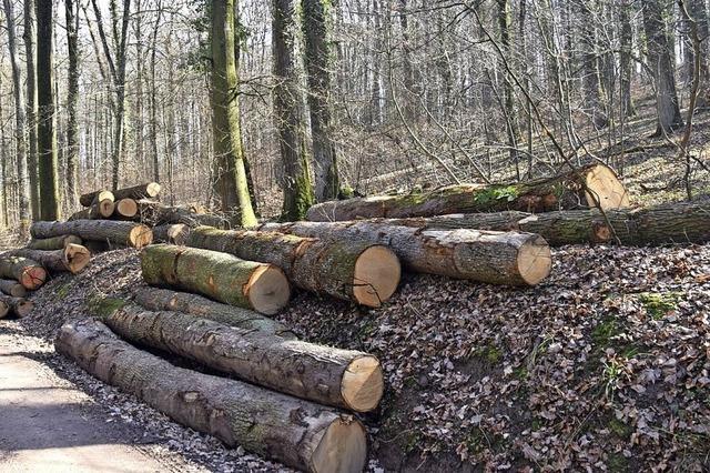 Gute Erlöse aus Holzernte zu erwarten