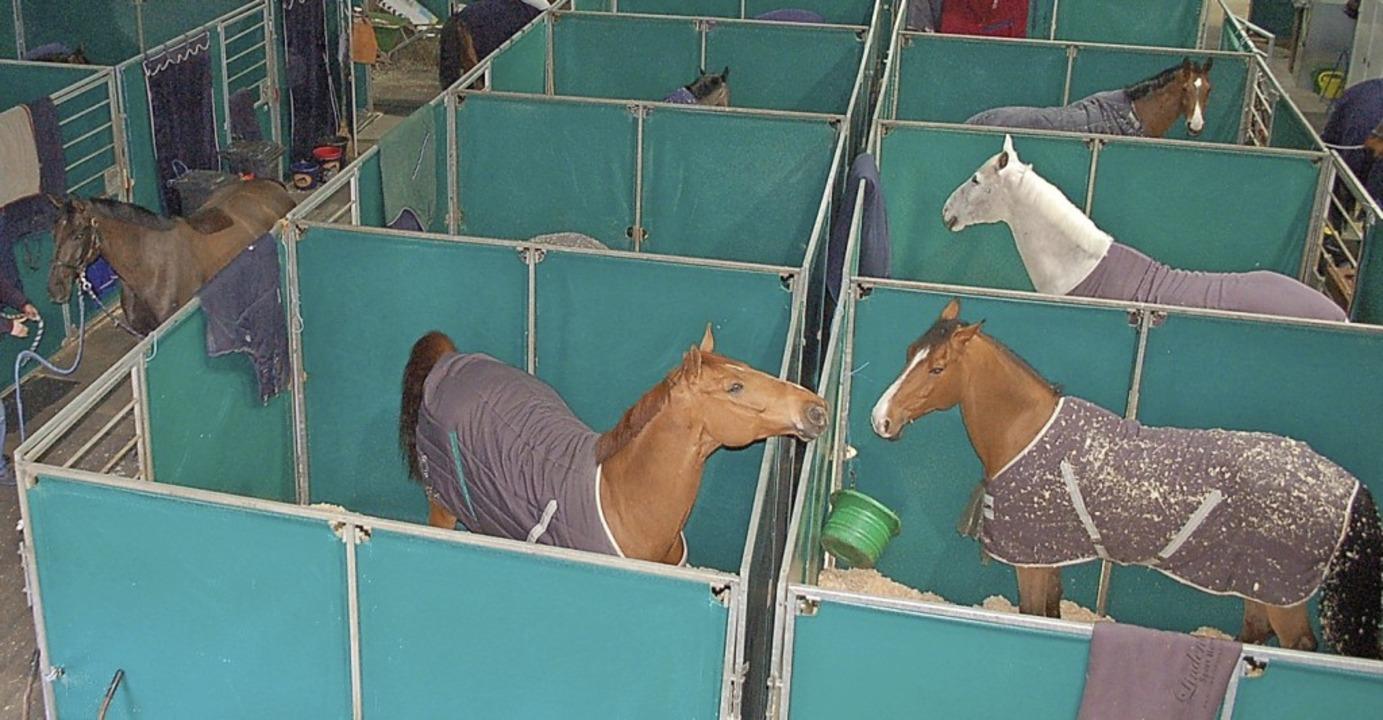 Zahlreiche Top-Pferde werden in Offenburg erwartet.     Foto: Archivfoto: hrö