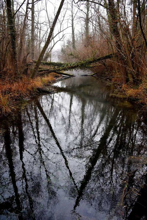 Schluten  in den Rheinauen sind alte Wassergräben.  | Foto: Gollrad