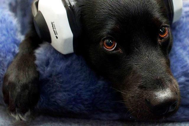Wie lassen sich Haustiere vor Feuerwerks-Panik schützen?