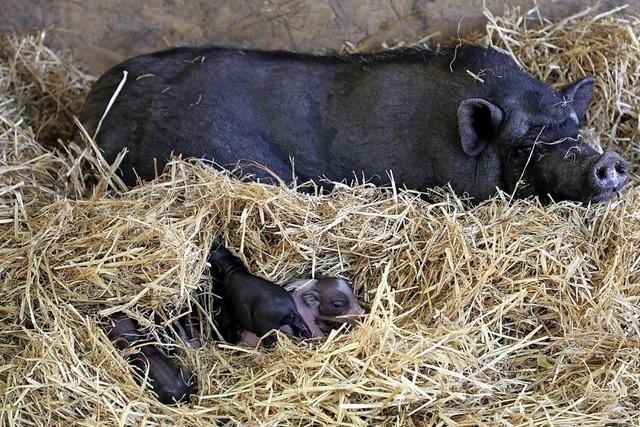 Neuried hatte mächtig viel Schwein
