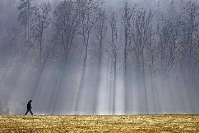 Bäume leisten Klimaschutz
