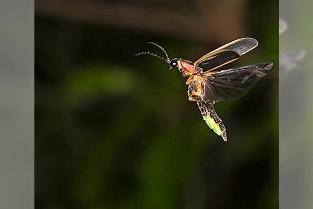 Für den Erhalt der Wunderwelt der Insekten