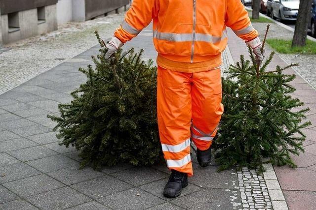 Abfallwirtschaft Freiburg holt ab Montag die Weihnachtsbäume ab