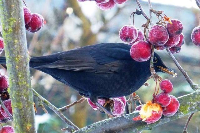 Darum lohnt es sich, jetzt eine Stunde lang Wintervögel zu zählen