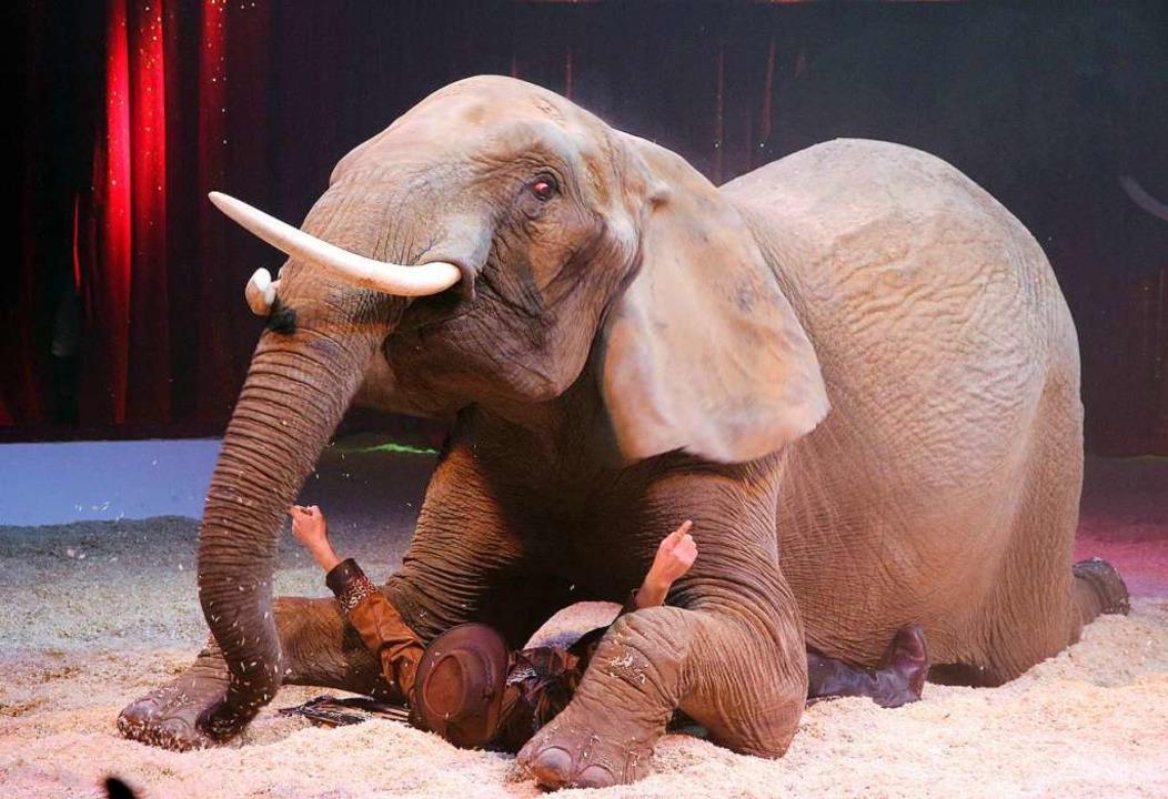 Da sind sogar die Zirkusmacher platt: ...tige Tiernummern wird es wieder geben.  | Foto: Peter Heck