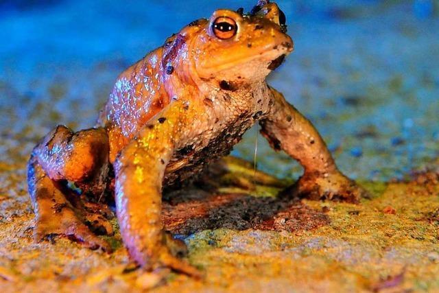 Was sind Amphibien?