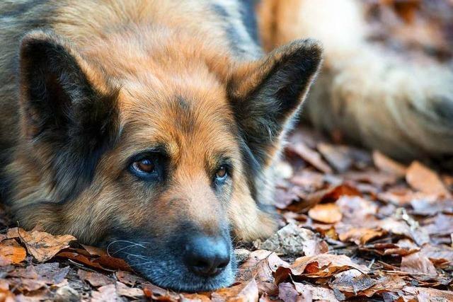 Was ist Hundesteuer?