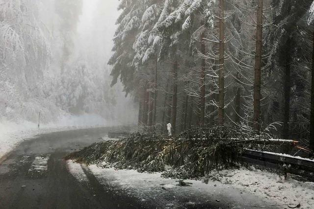 Schneebruch behindert den Verkehr in den Höhenlagen