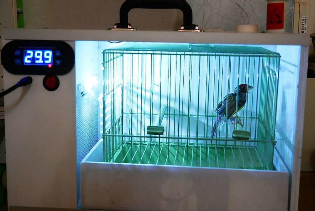 Warm ist es im Trocknerkäfig: Für den ...Vogel besteht keine Erkältungsgefahr.     Foto: Eva Korinth