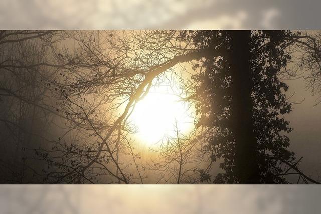 Mystische Nebelschwaden