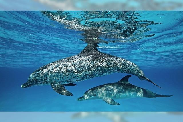 Abtauchen in Ozeanen