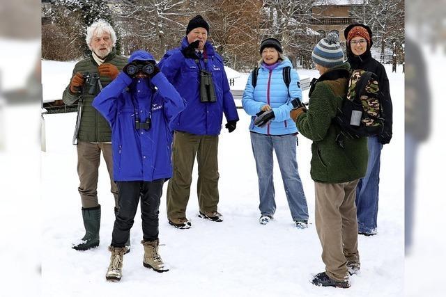 Zählung der Wintervögel gibt Anlass zur Sorge