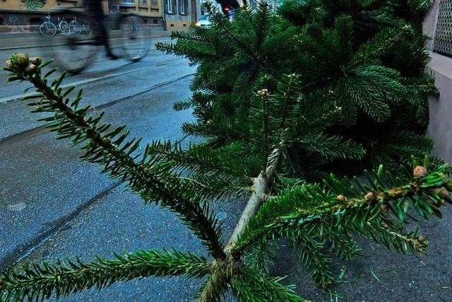 Was passiert eigentlich mit all den Weihnachtsbäumen?