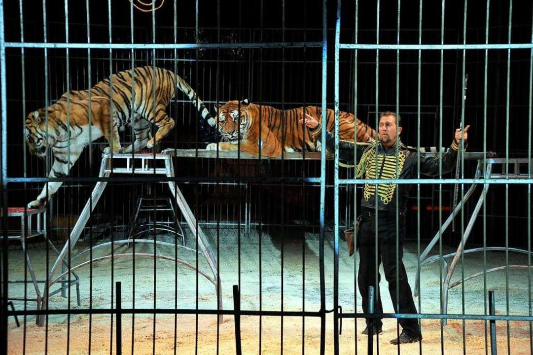 Dompteur mit sibirischen Tigern.  | Foto: Thomas Kunz
