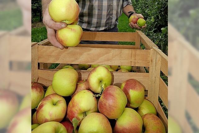 Die Arche Noah für alte Apfelsorten
