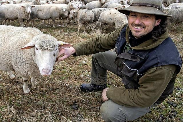 Kann ein Chip die Schafe schützen?