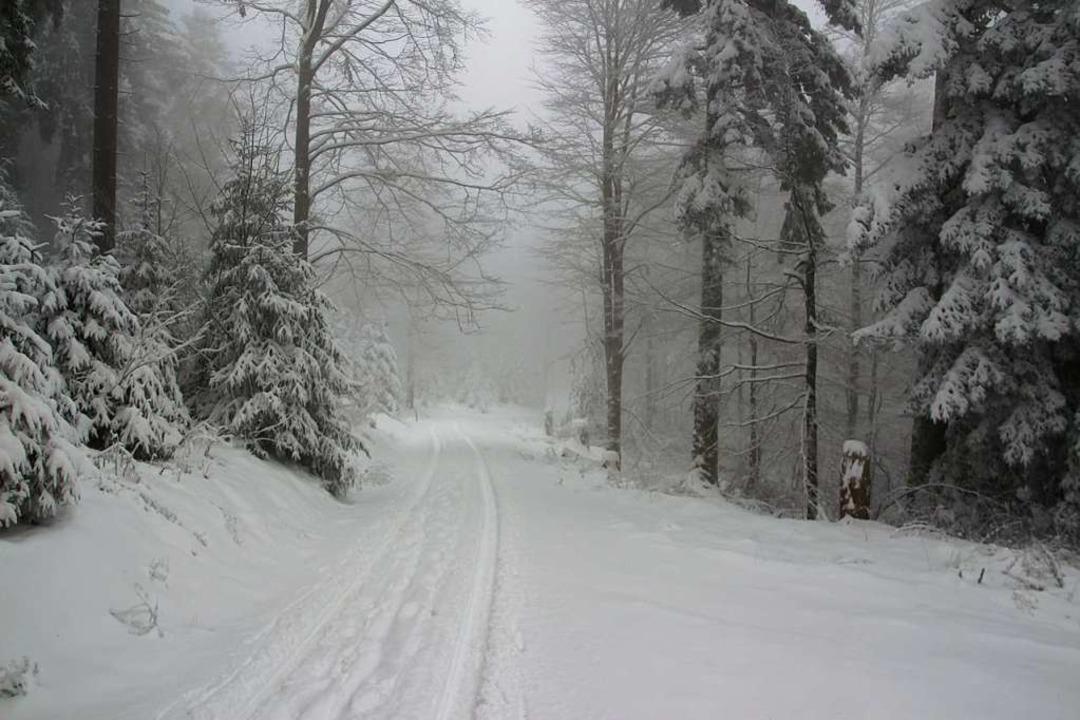 Dem kräftigen Schneefall sei Dank: Die...chenloipe auf dem Lipple sind gespurt.  | Foto: Kerstin Trefzer