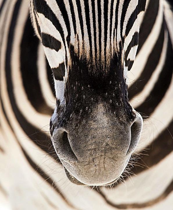 Musterbeispiel eines afrikanischen Tierlebens   | Foto: Niedermeier