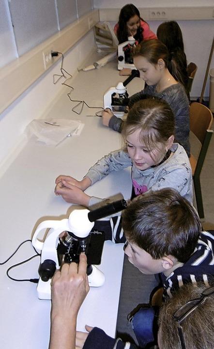 Am Mikroskop der Natur auf der Spur   | Foto: Hector Kinderakademie