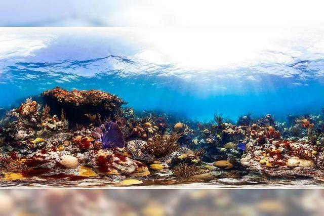 Was sind Korallen?