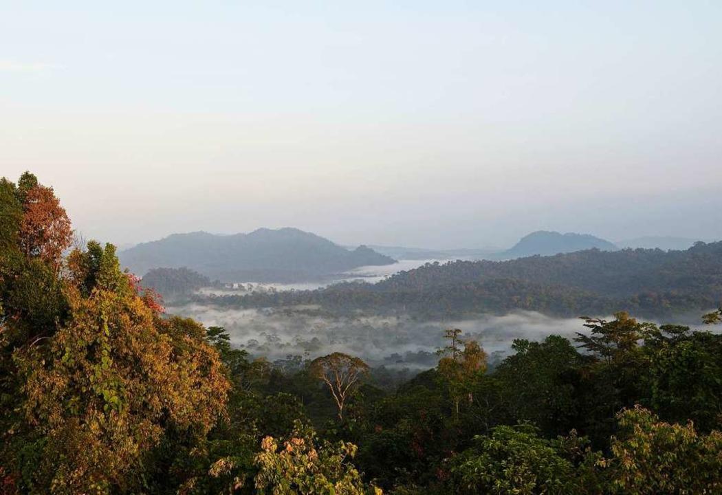 Morgenstimmung in Danum Valley, wo es noch ursprünglichen Regenwald gibt.  | Foto: Juliette Irmer