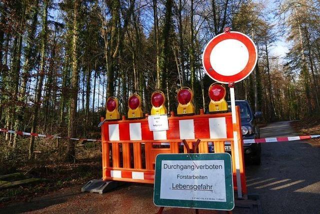 Am Rheinfelder Amstelsteig werden kranke Bäume gefällt